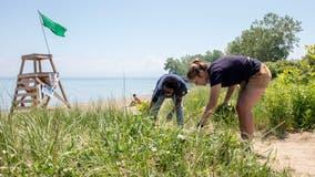 Shedd Aquarium seeks volunteers to help clean up Chicago beaches