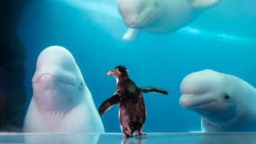 Shedd Aquarium free to Illinois residents on select days in September