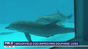 Brookfield Zoo improving dolphins' lives
