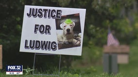 Pet dog shot dead: Suburban Chicago man will not face charges for shooting Ludwig