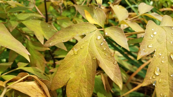 Fall-like weather finally comes to Chicago area, with overnight lows in 50s and more rain possible