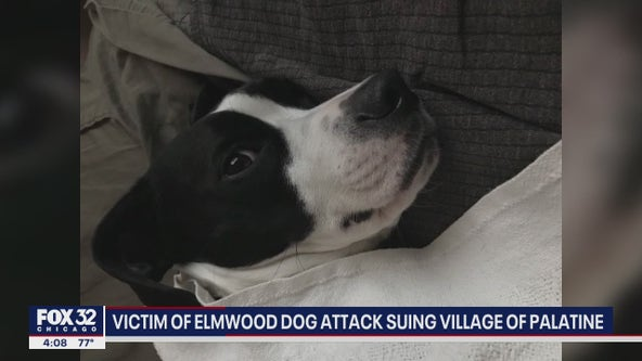 Victim of second dog attack sues Palatine for not euthanizing dogs involved in first deadly attack