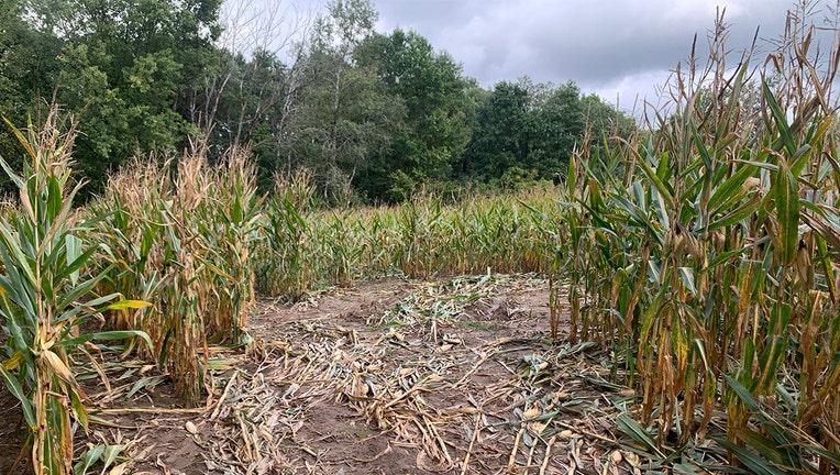 dunn county homicides cornfield
