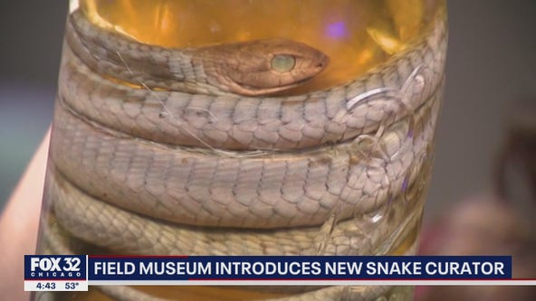 Field Museum hires new curator for reptiles, amphibians