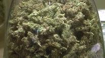 Justices to take up major medical marijuana case