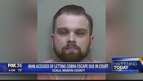 Man accused of letting cobra escape due in court