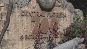 Central Florida Zoo & Botanical Gardens will reopen to public, establishes special hours for vulnerable guests