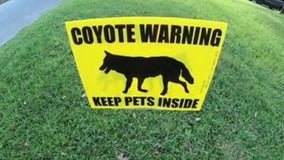 Casselberry woman warns residents about coyotes after cat was killed