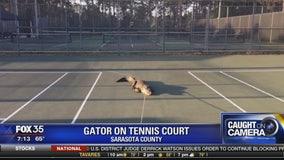 Gators in odd places around Florida