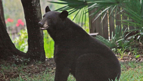 Woman attacked by bear in Central Florida neighborhood