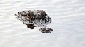 Alligator bites Florida college student in Everglades