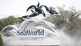 SeaWorld will or has temporarily furloughed 90% of workforce, according to SEC filing