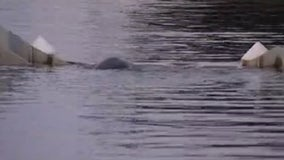 Mother, baby manatee trapped in spillway