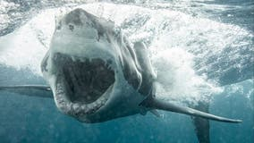 Man killed by shark off coast of Australia, and his body has not been found