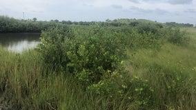 Governor DeSantis, Florida Cabinet approve land protection deals