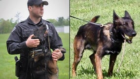 K-9 stabbed in head multiple times with screwdriver