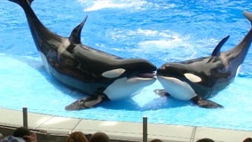 SeaWorld to pay $65M over accusations it lied about 'Blackfish' film impact