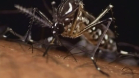Mosquito-borne illness advisory issued for Volusia County