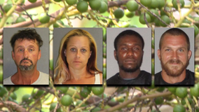 Four people arrested across two Florida counties after picking berries