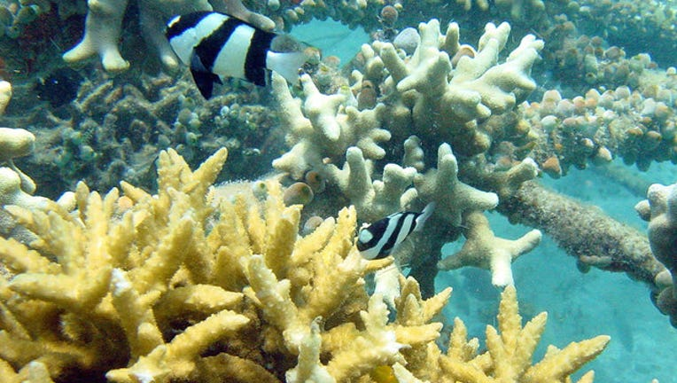 e097c1dd-Bali-Electrified-Coral-Reef_1445397601955.jpg