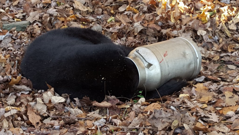 3e83f152-Bear in Milk Can_1447766611808-404959.png