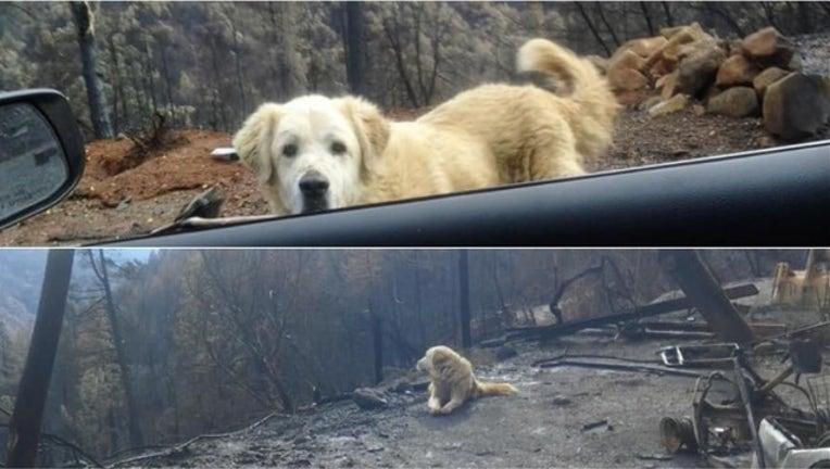 b85d7841-Camp Fire dog split_1544305788548.PNG-405538.jpg