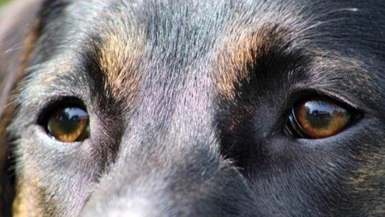 DOG EYES Generic-401096