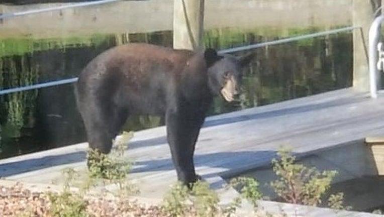 0d1cf1a2-FCSO_roaming bear_062419_1561401631488.png.jpg