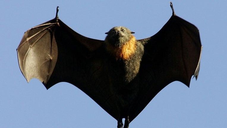 9ed79be8-GETTY bat_1559209880344.png.jpg