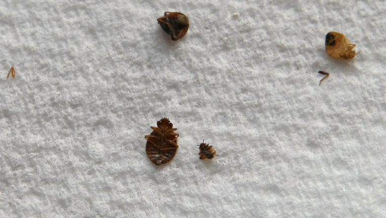 d7ea6841-GETTY bedbugs_1548885466980.jpg-407693.jpg
