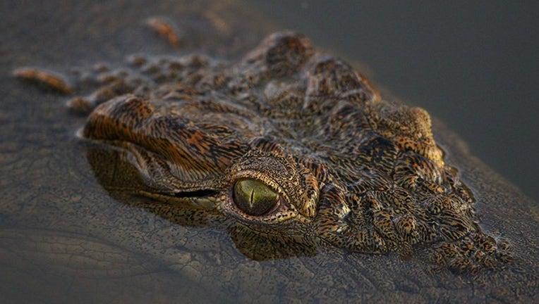 1af88267-GETTY crocodile_1528369663860.png.jpg