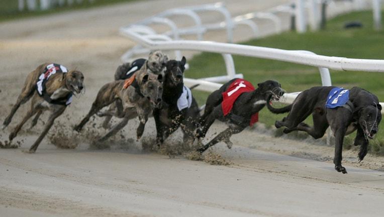 GETTY greyhound racing_1512071933938.jpg
