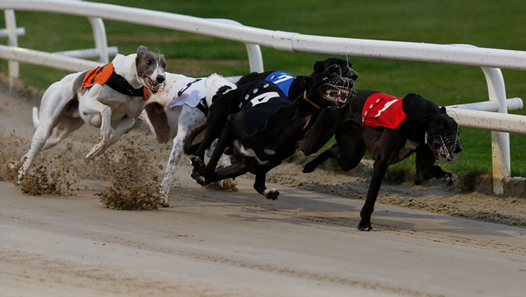 ce0759d4-GETTY_greyhounds_021019_1549808228239.png