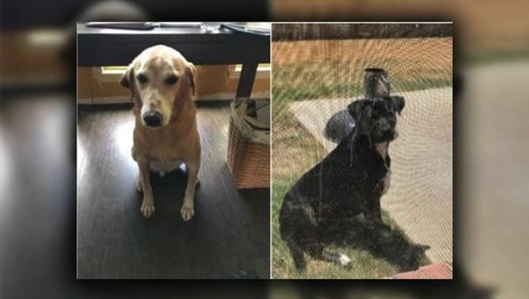 baa20ac8-Justin dogs killed_1546983605576.png-409650.jpg