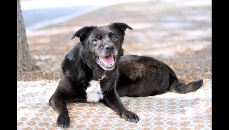 836da838-Kiva the Dog Puppy_1494419468203.jpg