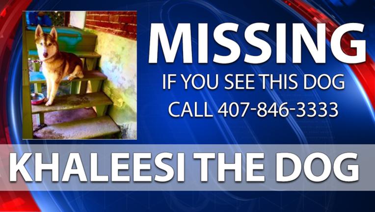 9a4a42c4-Missing-Khaleesi-Dog_1497958948954.png