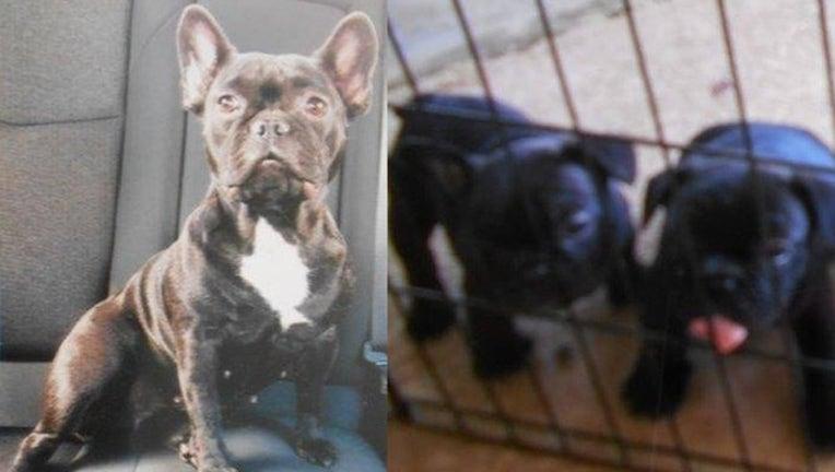 4b9d1f40-PCSO_stolen puppies_060319_1559582112048.png.jpg