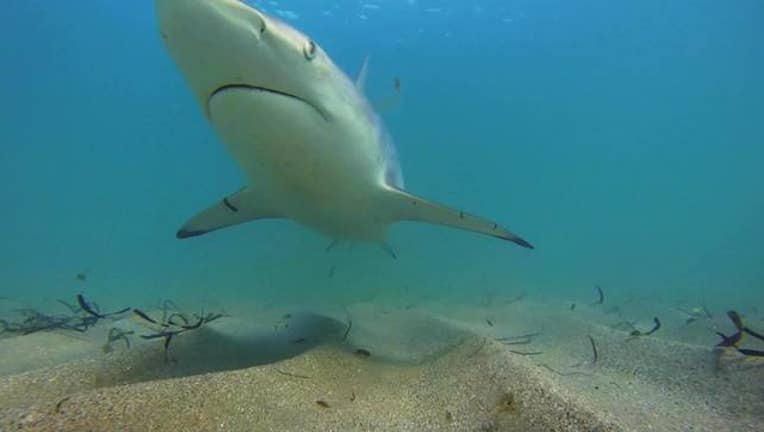 895f3ce0-Shark_migration_season_kicks_off_0_20180301175448