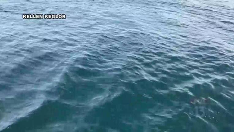ddac6b88-Shark_takes_bait_off_Indian_Rocks_Beach__0_20170116174530-401385