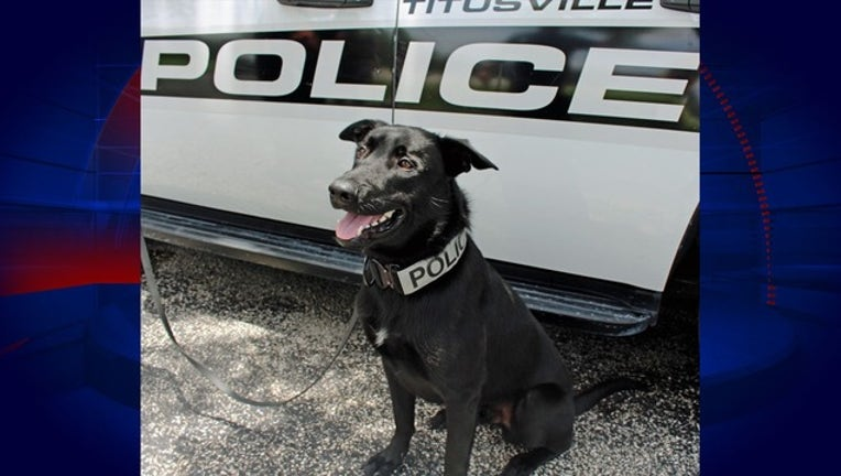 6913743d-TITUSVILLE POLICE_K9 Chase(1)_111918_1542658572264.png.jpg