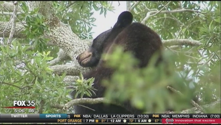 1a775f6c-Volunteers_searching_for_cubs_left_behin_0_20151029221400