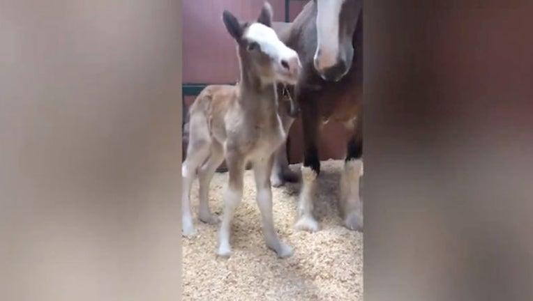 bbb013c2-Warm Springs Ranch_Baby Horse_031519_1552650643158.jpg-403440.jpg