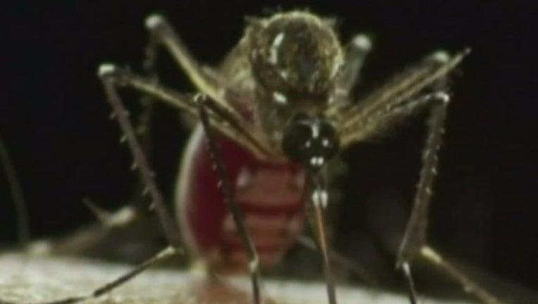 ZikaMosquito1_1454643600265-402429-402429.jpg