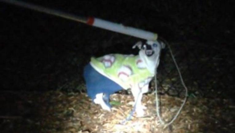 deb051ce-angry dog2_1480709546448-401385.jpg