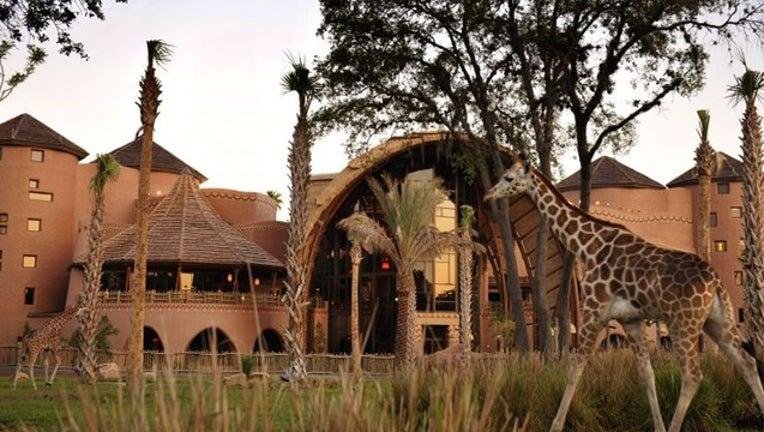 72eae8c4-animal kingdom lodge_1531256449984.png.jpg
