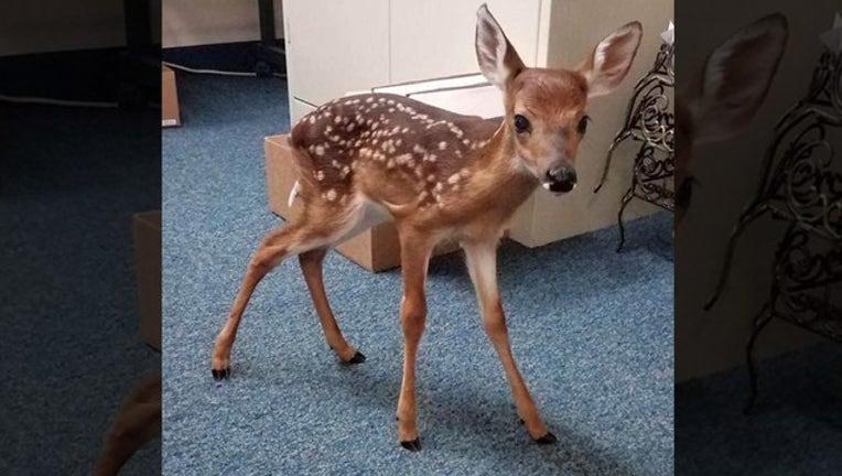 ba37c711-baby deer for web_1555172802292.png.jpg