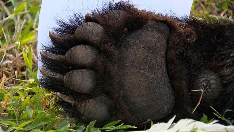 ce419963-bear-paw-heathrow_1543454280876.jpg