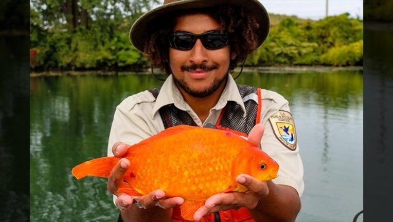 10c50201-big fish_1560963366497.png.jpg