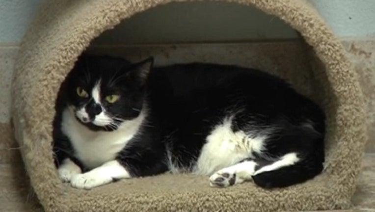 9f1835f2-black friday deals on pet adoption_112318_1543026864708.jpg.jpg