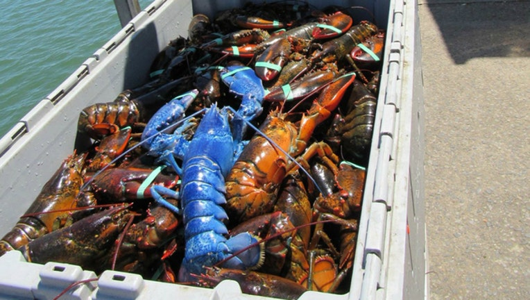 2fa4af1c-blue-lobster_1470930083612-404023.jpg